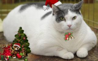 big_cat_fluffy_hat_rings