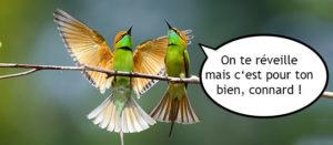 oiseaux-grospecs-vegane
